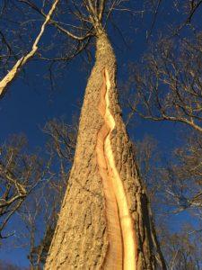 Veteraniserat blixtnedslag i Runstorp naturreservat